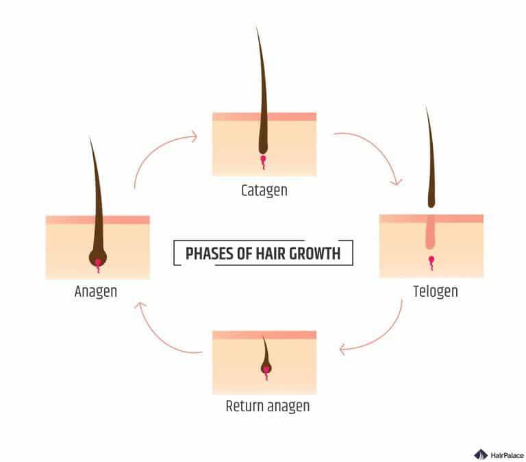 Das Haar braucht länger zum Wachsen